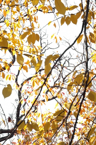 outdoor, autumn,spring, winter woods, trees, fallcentral park,colorful, green, , leaves, conservation awareness, impact, stock photos, scenic, green